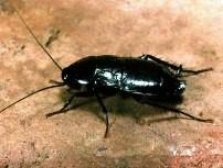 Снимка на хлебарка